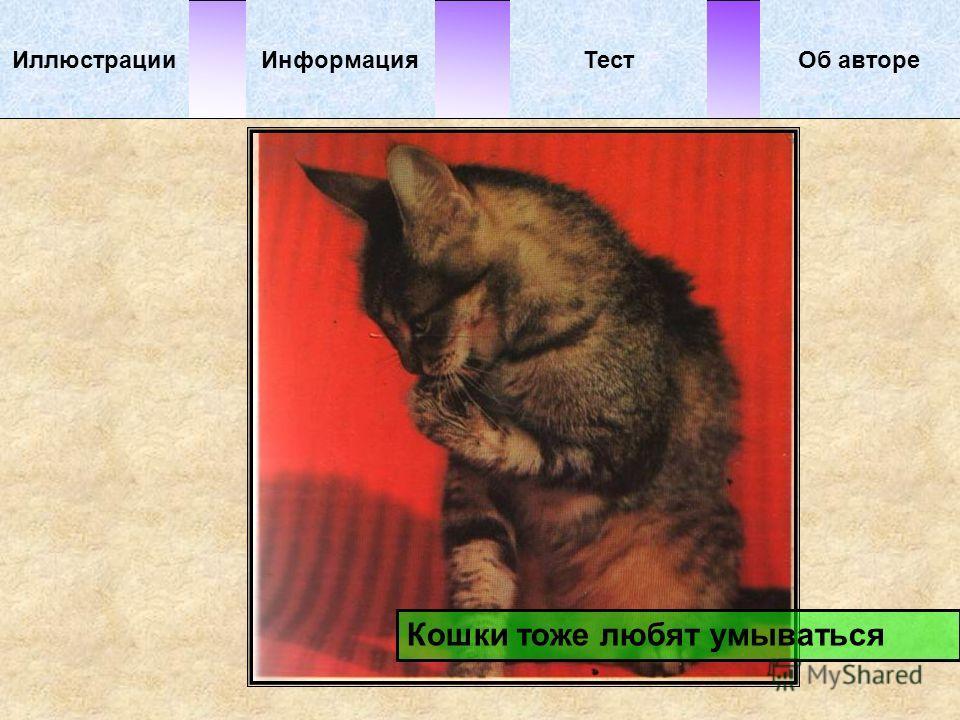 ИллюстрацииТестОб автореИнформация Кошки тоже любят умываться