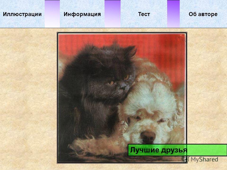 ИллюстрацииТестОб автореИнформация Лучшие друзья