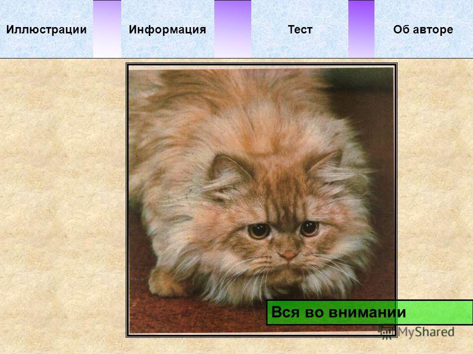 ИллюстрацииТестОб автореИнформация Вся во внимании