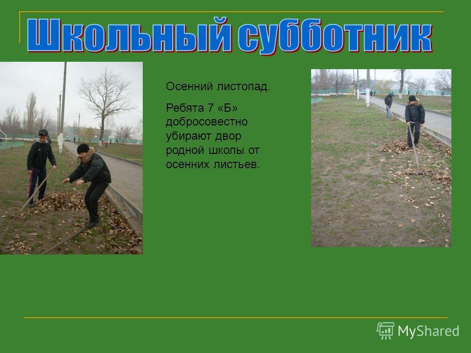 Осенний листопад. Ребята 7 «Б» добросовестно убирают двор родной школы от осенних листьев.