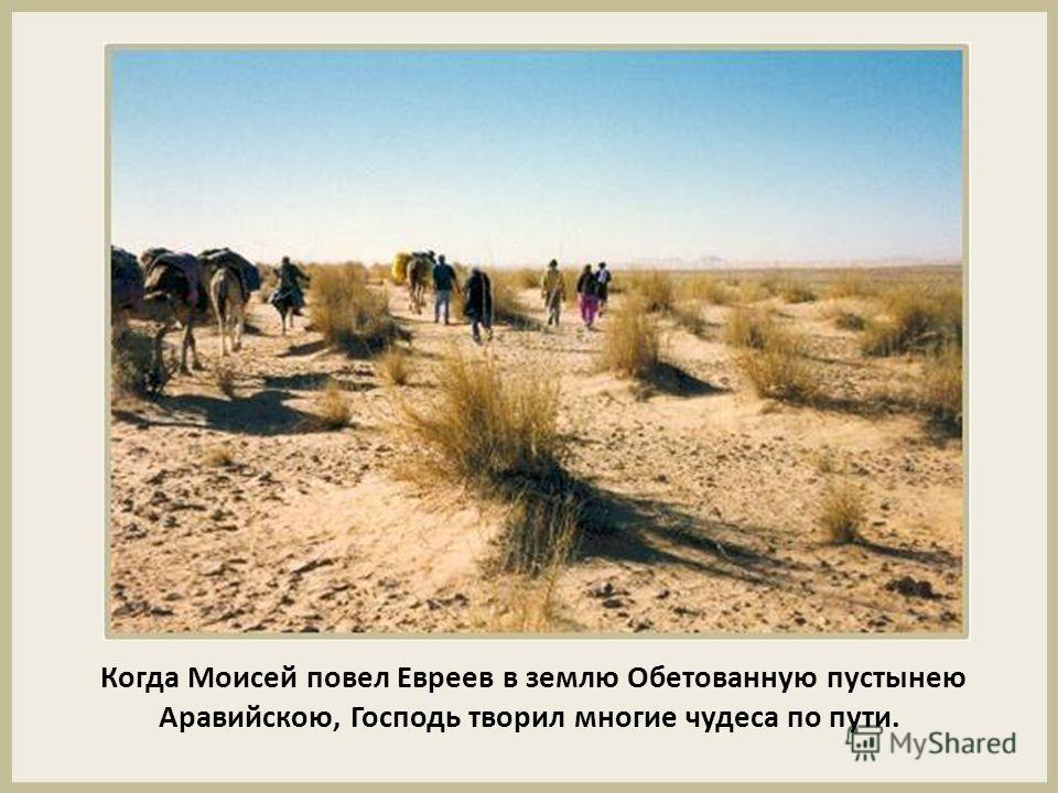 Когда Моисей повел Евреев в землю Обетованную пустынею Аравийскою, Господь творил многие чудеса по пути.