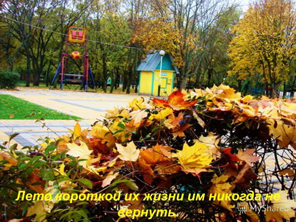 С дерева падают листья, свой завершая путь,