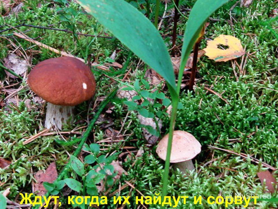 А грибы беззаботно сидят,