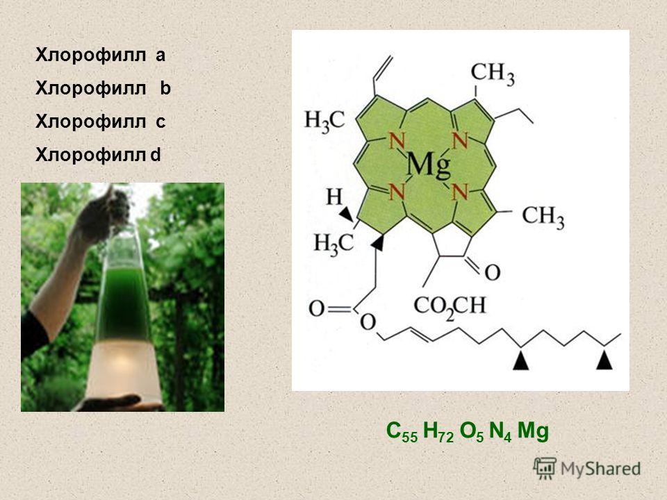 С 55 Н 72 О 5 N 4 Mg Хлорофилл а Хлорофилл b Хлорофилл с Хлорофилл d