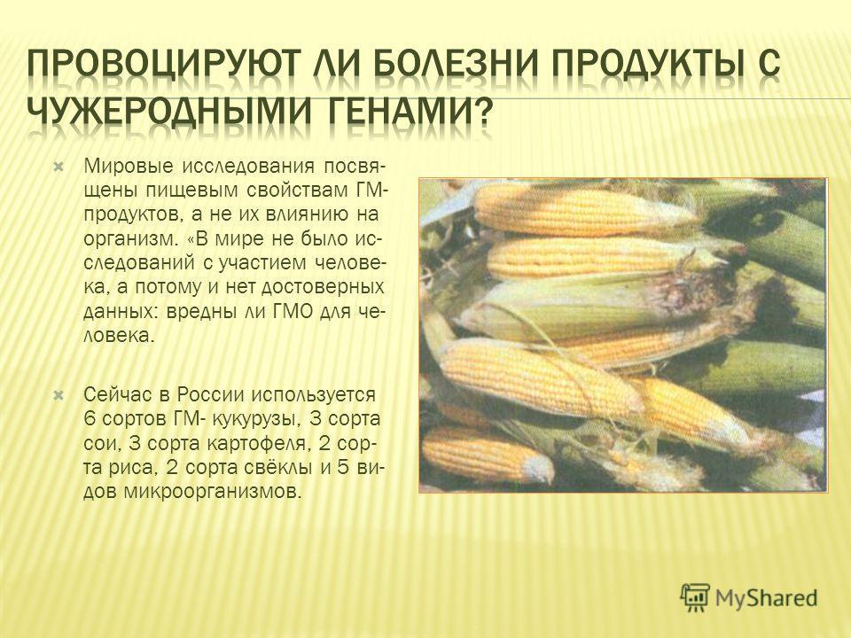 Мировые исследования посвя- щены пищевым свойствам ГМ- продуктов, а не их влиянию на организм. «В мире не было ис- следований с участием челове- ка, а потому и нет достоверных данных: вредны ли ГМО для че- ловека. Сейчас в России используется 6 сорто