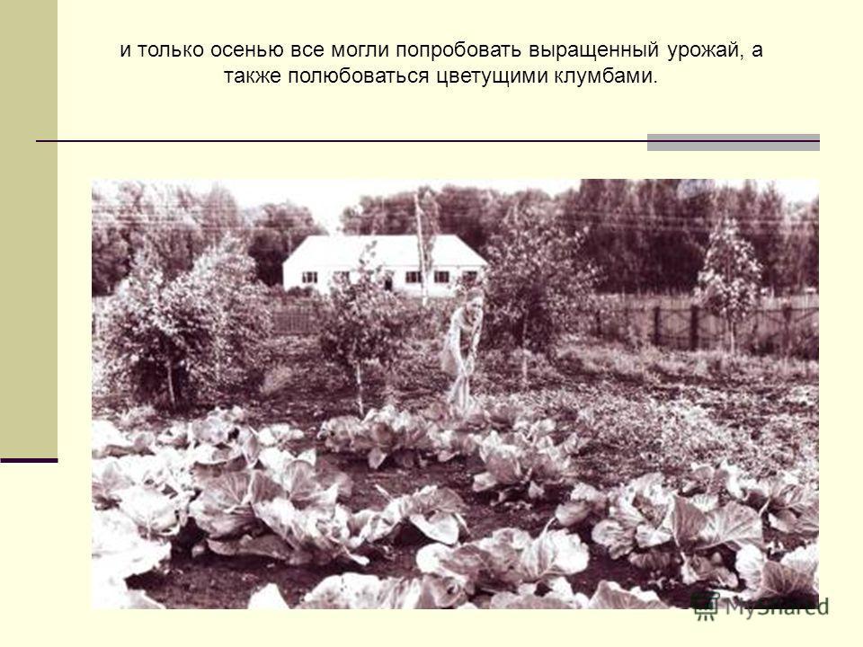 и только осенью все могли попробовать выращенный урожай, а также полюбоваться цветущими клумбами.
