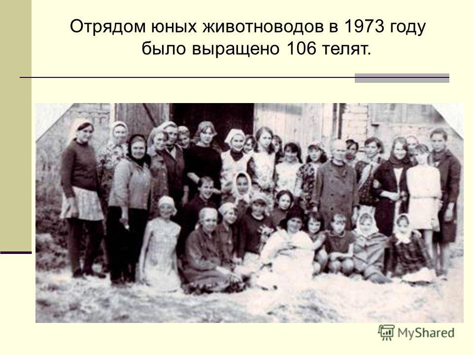 Отрядом юных животноводов в 1973 году было выращено 106 телят.