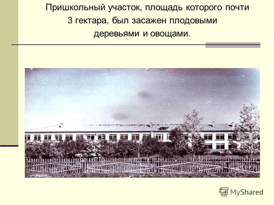 Пришкольный участок, площадь которого почти 3 гектара, был засажен плодовыми деревьями и овощами.