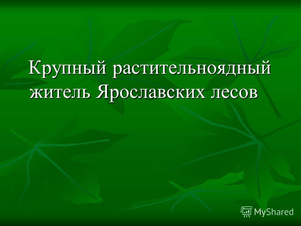 Крупный растительноядный житель Ярославских лесов Крупный растительноядный житель Ярославских лесов