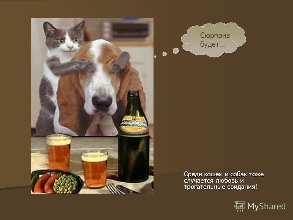 Среди кошек и собак тоже случается любовь и трогательные свидания! Сюрприз будет…