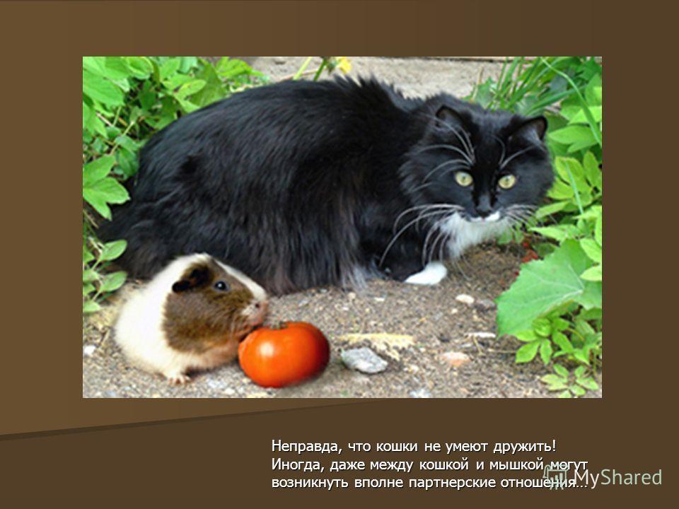Неправда, что кошки не умеют дружить! Иногда, даже между кошкой и мышкой могут возникнуть вполне партнерские отношения…