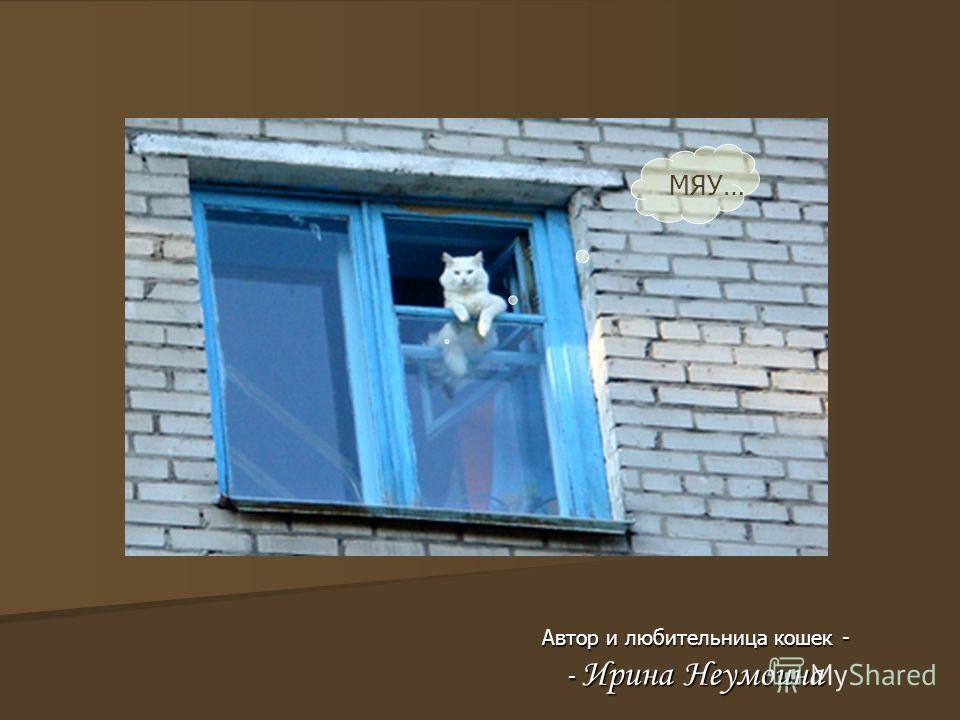 Автор и любительница кошек - - Ирина Неумоина МЯУ…
