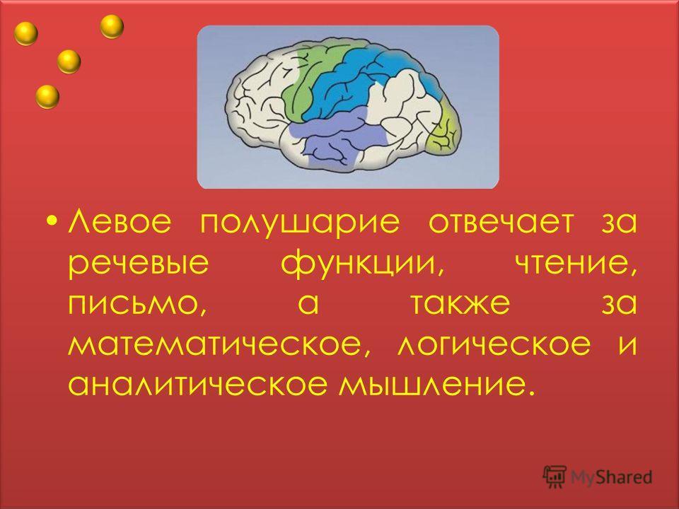 Левое полушарие отвечает за речевые функции, чтение, письмо, а также за математическое, логическое и аналитическое мышление.
