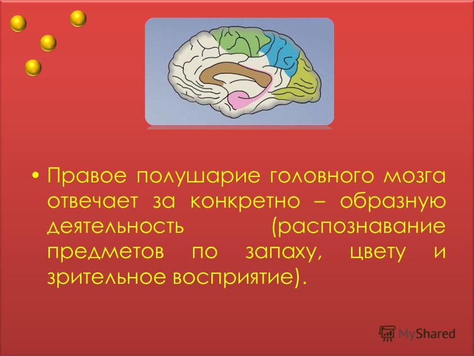 Правое полушарие головного мозга отвечает за конкретно – образную деятельность (распознавание предметов по запаху, цвету и зрительное восприятие).
