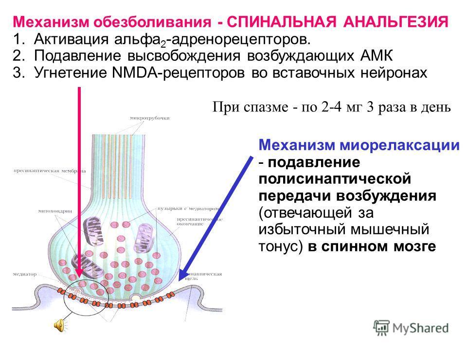 Механизм обезболивания - СПИНАЛЬНАЯ АНАЛЬГЕЗИЯ 1. Активация альфа 2 -адренорецепторов. 2. Подавление высвобождения возбуждающих АМК 3. Угнетение NMDA-рецепторов во вставочных нейронах Механизм миорелаксации - подавление полисинаптической передачи воз