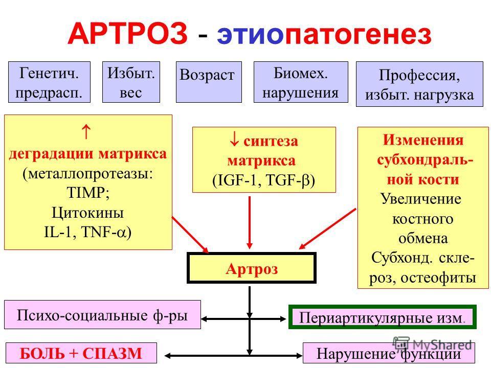 АРТРОЗ - этиопатогенез Артроз Генетич. предрасп. Избыт. вес Возраст Биомех. нарушения Профессия, избыт. нагрузка деградации матрикса (металлопротеазы: TIMP; Цитокины IL-1, TNF- ) синтеза матрикса (IGF-1, TGF- ) Изменения субхондраль- ной кости Увелич
