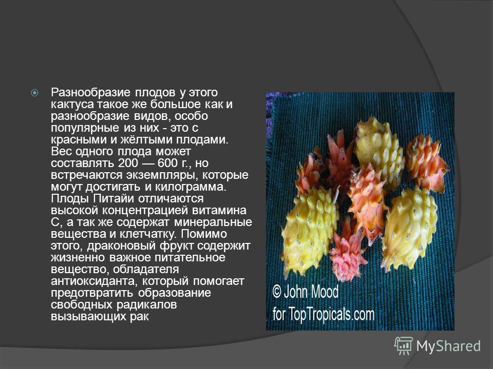 Разнообразие плодов у этого кактуса такое же большое как и разнообразие видов, особо популярные из них - это с красными и жёлтыми плодами. Вес одного плода может составлять 200 600 г., но встречаются экземпляры, которые могут достигать и килограмма.