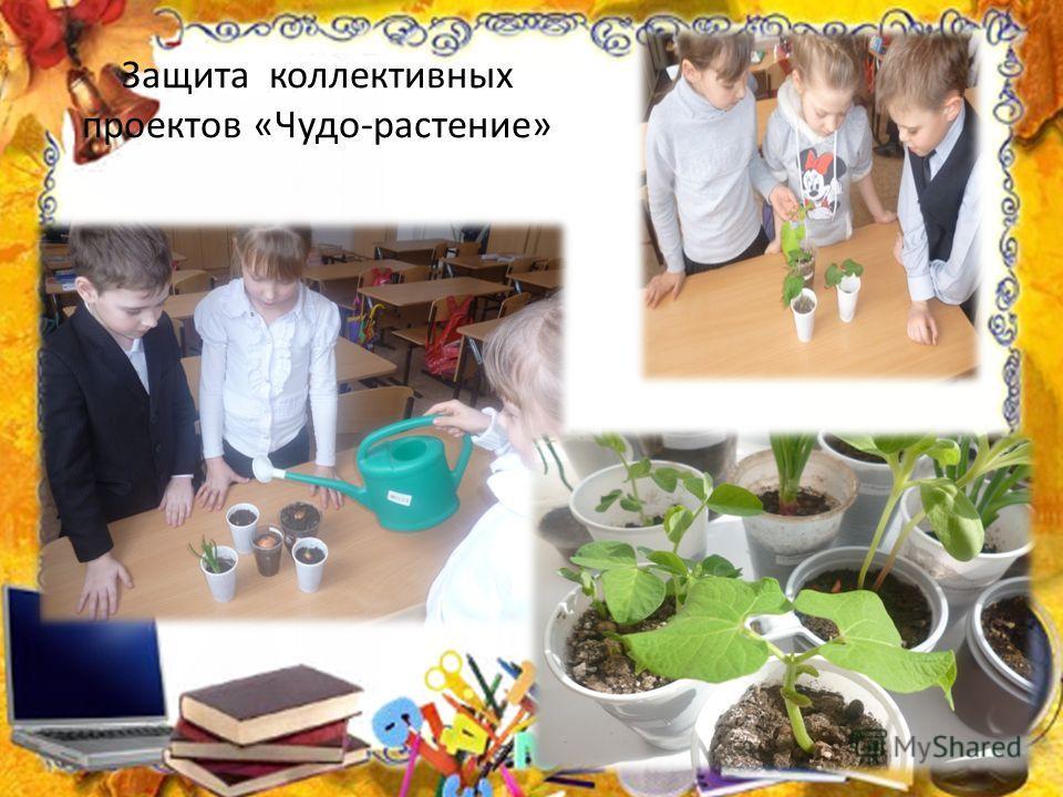 Защита коллективных проектов «Чудо-растение»