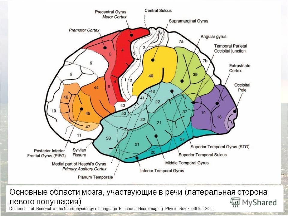 Основные области мозга, участвующие в речи (латеральная сторона левого полушария) Demonet et al. Renewal of the Neurophysiology of Language: Functional Neuroimaging. Physiol Rev 85:49-95, 2005.