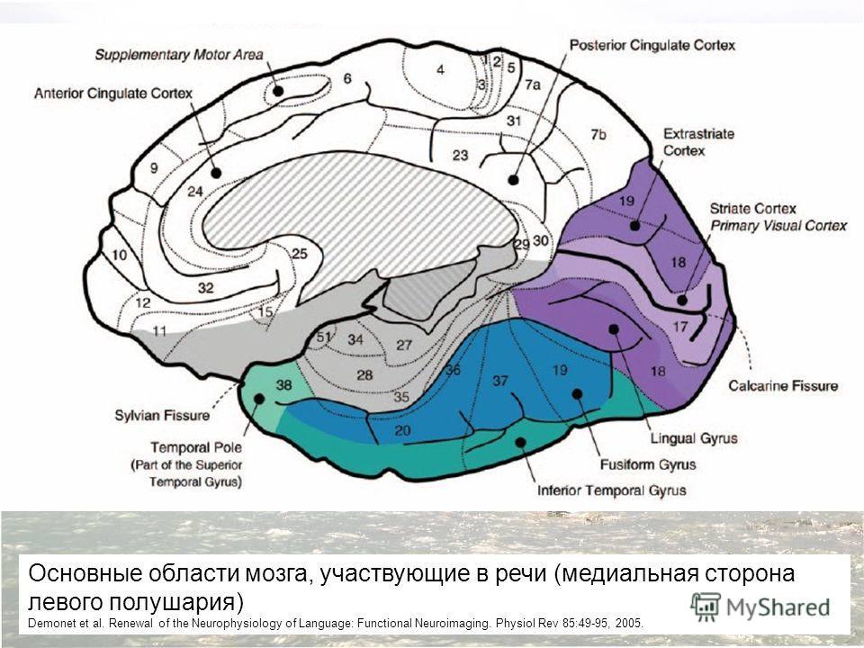 Основные области мозга, участвующие в речи (медиальная сторона левого полушария) Demonet et al. Renewal of the Neurophysiology of Language: Functional Neuroimaging. Physiol Rev 85:49-95, 2005.