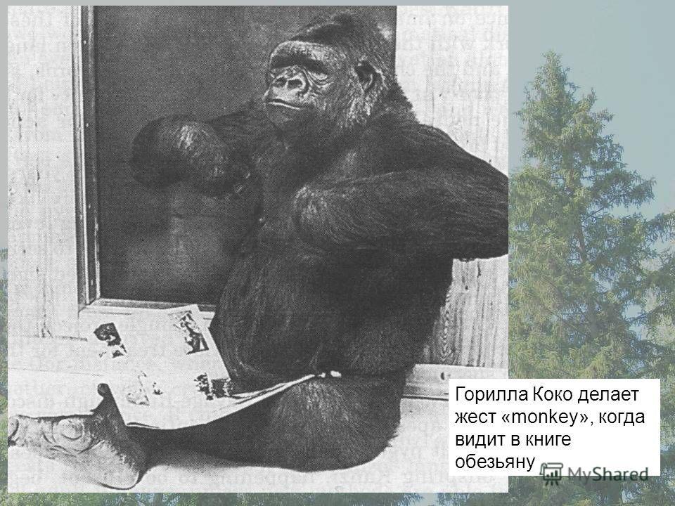 Горилла Коко делает жест «monkey», когда видит в книге обезьяну