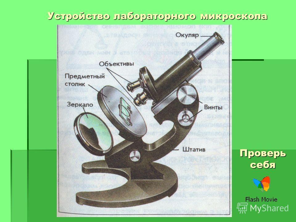 Устройство лабораторного микроскопа Проверь себя
