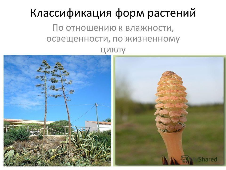Классификация форм растений По отношению к влажности, освещенности, по жизненному циклу
