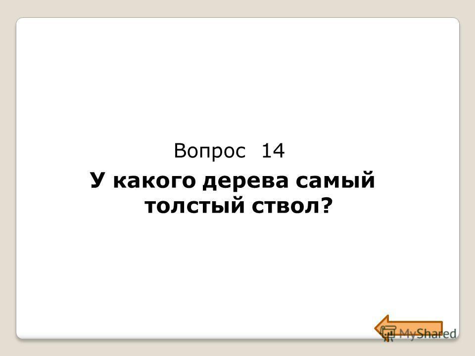 Вопрос 14 У какого дерева самый толстый ствол?
