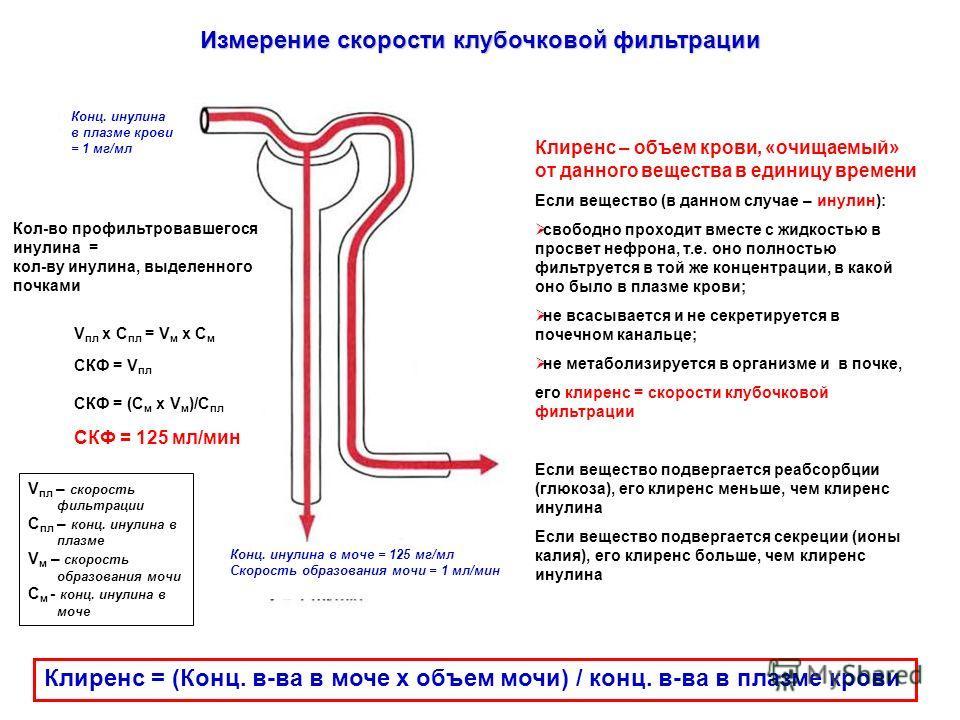 Измерение скорости клубочковой фильтрации Клиренс = (Конц. в-ва в моче х объем мочи) / конц. в-ва в плазме крови Конц. инулина в плазме крови = 1 мг/мл Кол-во профильтровавшегося инулина = кол-ву инулина, выделенного почками V пл х С пл = V м х С м С