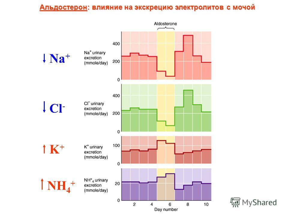 Альдостерон: влияние на экскрецию электролитов с мочой Na + Cl - K+K+ NH 4 +