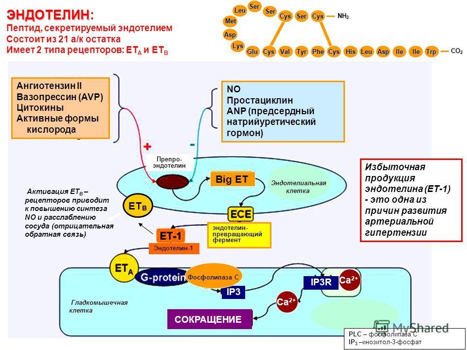 Препро- эндотелин Ангиотензин II Вазопрессин (AVP) Цитокины Активные формы кислорода NO Простациклин ANP (предсердный натрийуретический гормон) IP3R IP3 СОКРАЩЕНИЕ Са 2+ ЭНДОТЕЛИН ЭНДОТЕЛИН: Пептид, секретируемый эндотелием Состоит из 21 а/к остатка