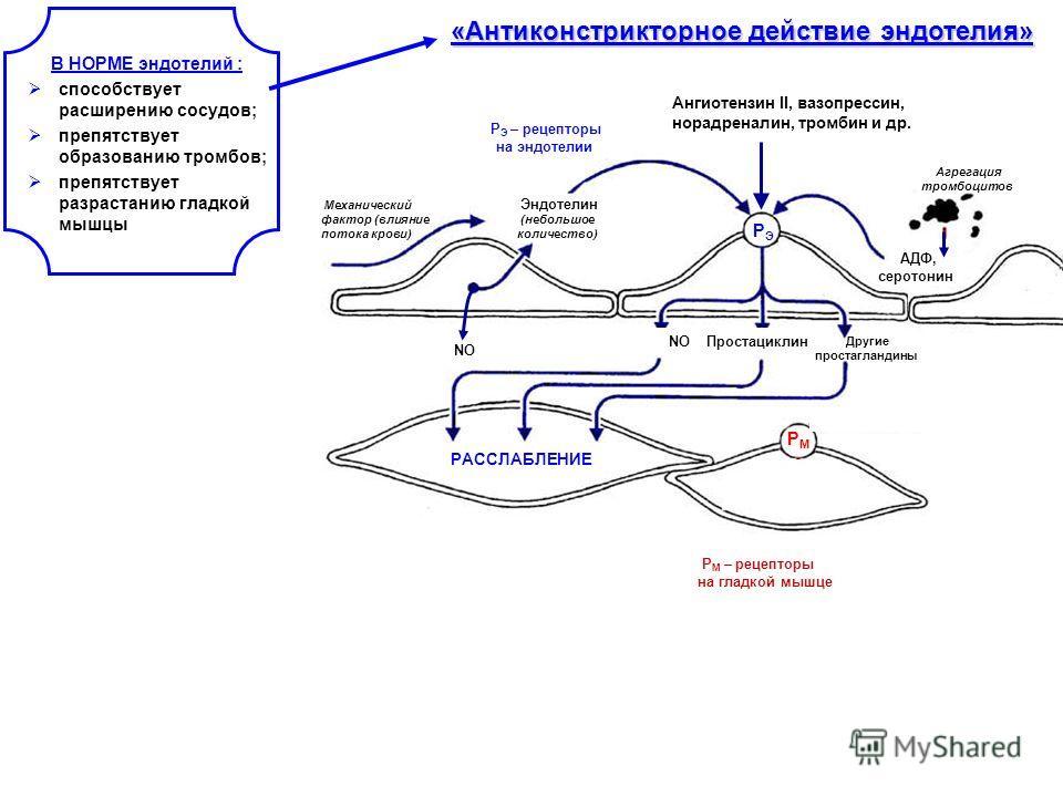 «Антиконстрикторное действие эндотелия» Механический фактор (влияние потока крови) Эндотелин (небольшое количество) NO РЭ РЭ РМ РМ РАССЛАБЛЕНИЕ Агрегация тромбоцитов АДФ, серотонин NO Простациклин Другие простагландины Ангиотензин II, вазопрессин, но