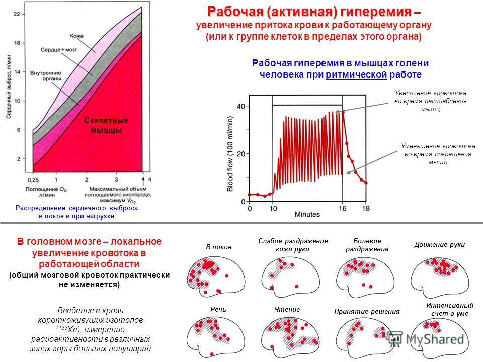 Рабочая (активная) гиперемия Рабочая (активная) гиперемия – увеличение притока крови к работающему органу (или к группе клеток в пределах этого органа) Рабочая гиперемия в мышцах голени человека при ритмической работе В головном мозге – локальное уве