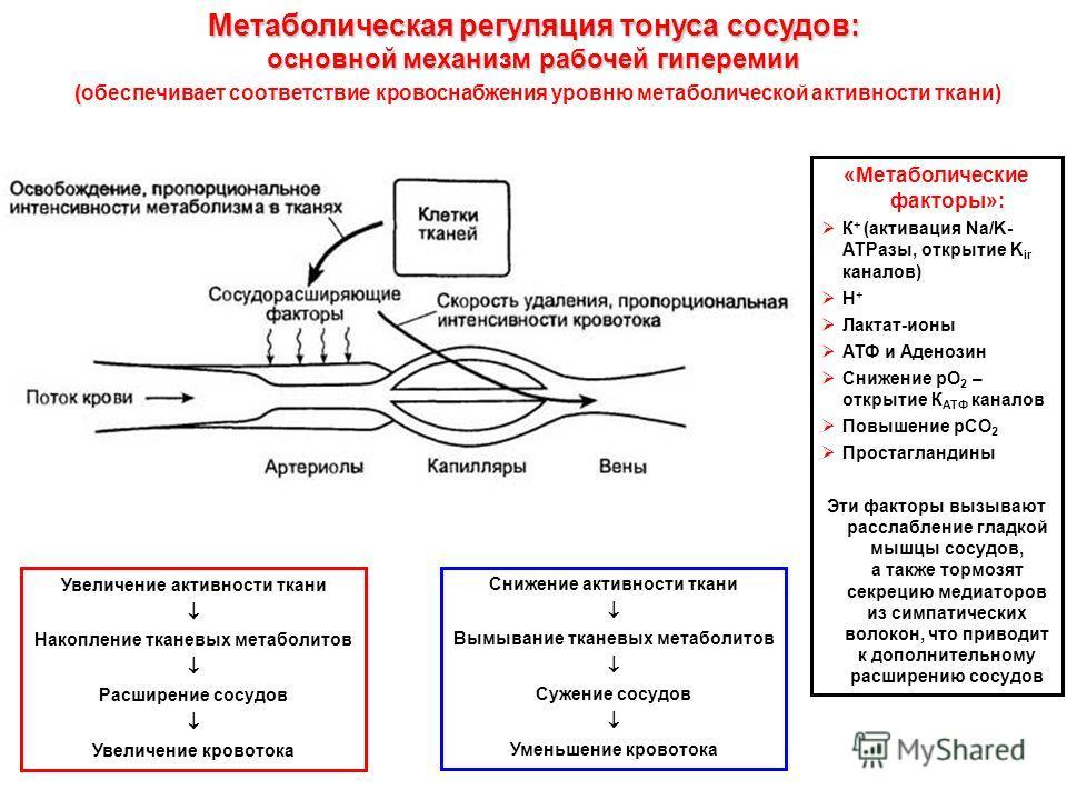 Метаболическая регуляция тонуса сосудов: основной механизм рабочей гиперемии ( (обеспечивает соответствие кровоснабжения уровню метаболической активности ткани) Увеличение активности ткани Накопление тканевых метаболитов Расширение сосудов Увеличение