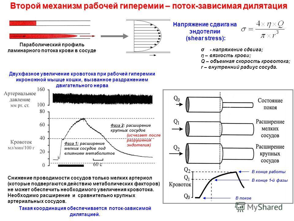 Параболический профиль ламинарного потока крови в сосуде Напряжение сдвига на эндотелии (shear stress): Второй механизм рабочей гиперемии – поток-зависимая дилятация σ - напряжение сдвига; η – вязкость крови; Q – объемная скорость кровотока; r – внут