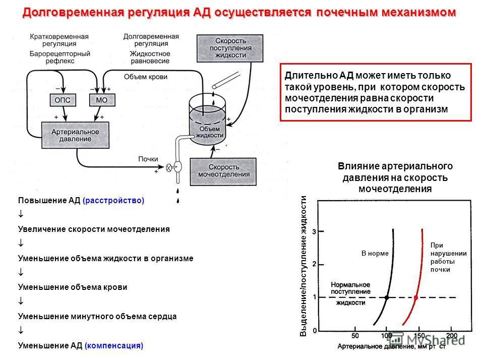 Долговременная регуляция АД осуществляется почечным механизмом Влияние артериального давления на скорость мочеотделения В норме При нарушении работы почки Повышение АД (расстройство) Увеличение скорости мочеотделения Уменьшение объема жидкости в орга