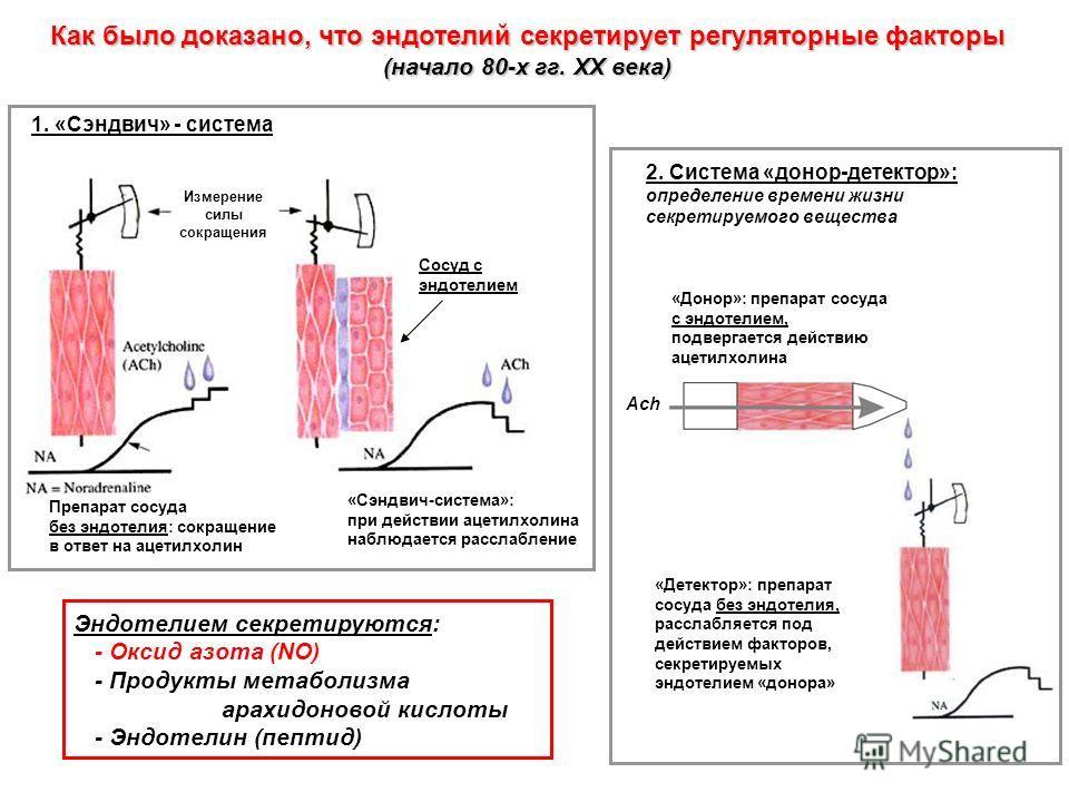 Как было доказано, что эндотелий секретирует регуляторные факторы (начало 80-х гг. XX века) Препарат сосуда без эндотелия: сокращение в ответ на ацетилхолин «Сэндвич-система»: при действии ацетилхолина наблюдается расслабление Измерение силы сокращен