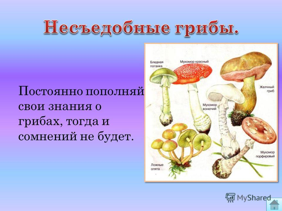 Постоянно пополняй свои знания о грибах, тогда и сомнений не будет.