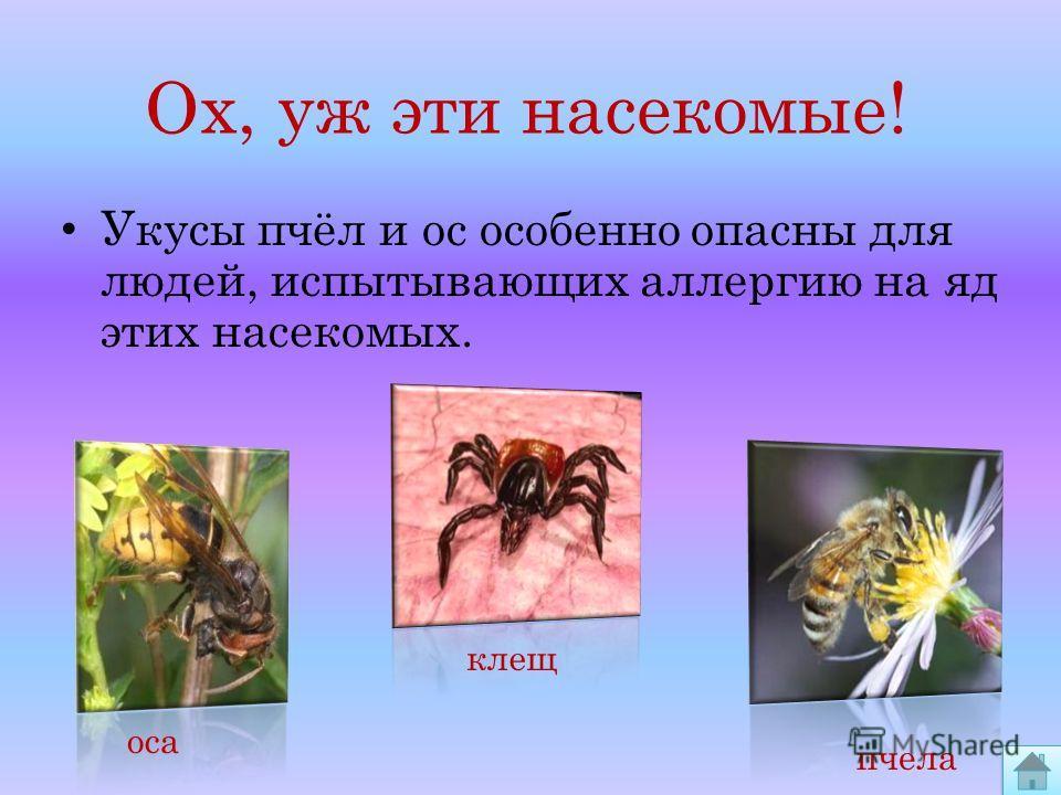 Укусы пчёл и ос особенно опасны для людей, испытывающих аллергию на яд этих насекомых. оса клещ пчела Ох, уж эти насекомые!