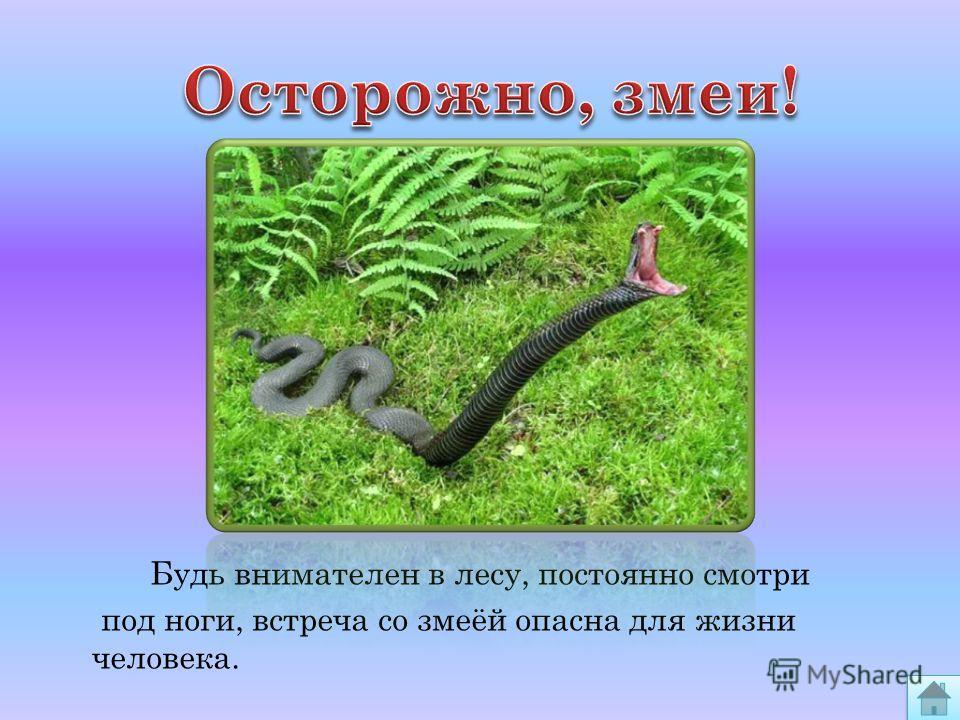 Будь внимателен в лесу, постоянно смотри под ноги, встреча со змеёй опасна для жизни человека.