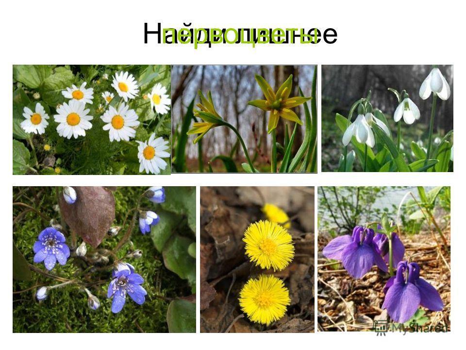 Найди лишнеепервоцветы