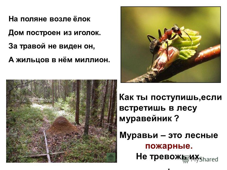 На поляне возле ёлок Дом построен из иголок. За травой не виден он, А жильцов в нём миллион. Как ты поступишь,если встретишь в лесу муравейник ? Муравьи – это лесные пожарные. Не тревожь их..