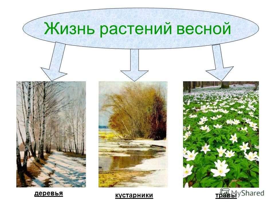 Жизнь растений весной деревья кустарникитравы
