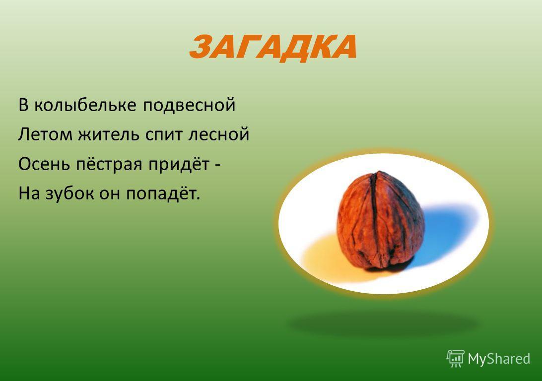 Любарова Н.Н. ЛИЦЕЙ 533 Красногвардейский район