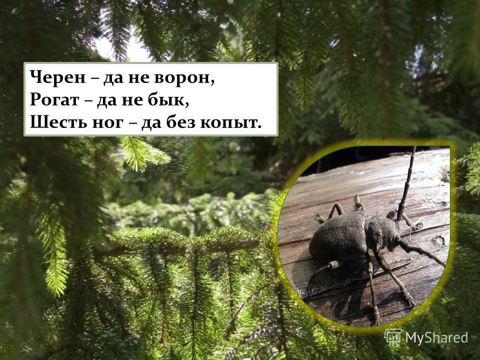 Черен – да не ворон, Рогат – да не бык, Шесть ног – да без копыт.