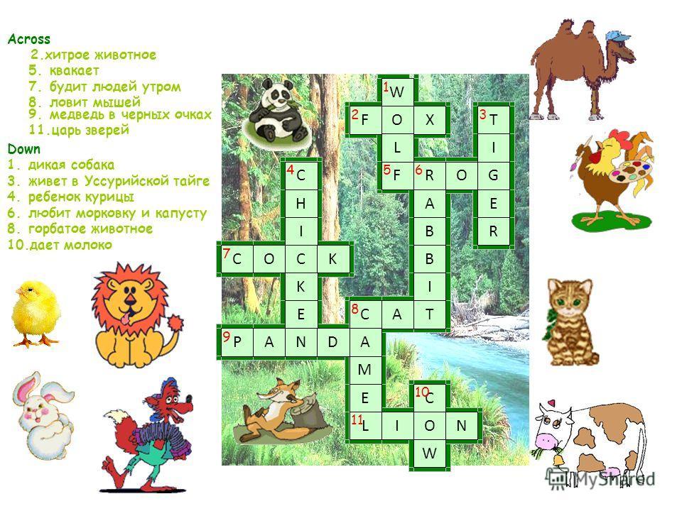 Across 2.хитрое животное 5.квакает 7.будит людей утром 8.ловит мышей 9.медведь в черных очках 11.царь зверей Down 1.дикая собака 3.живет в Уссурийской тайге 4.ребенок курицы 6.любит морковку и капусту 8.горбатое животное 10.дает молоко