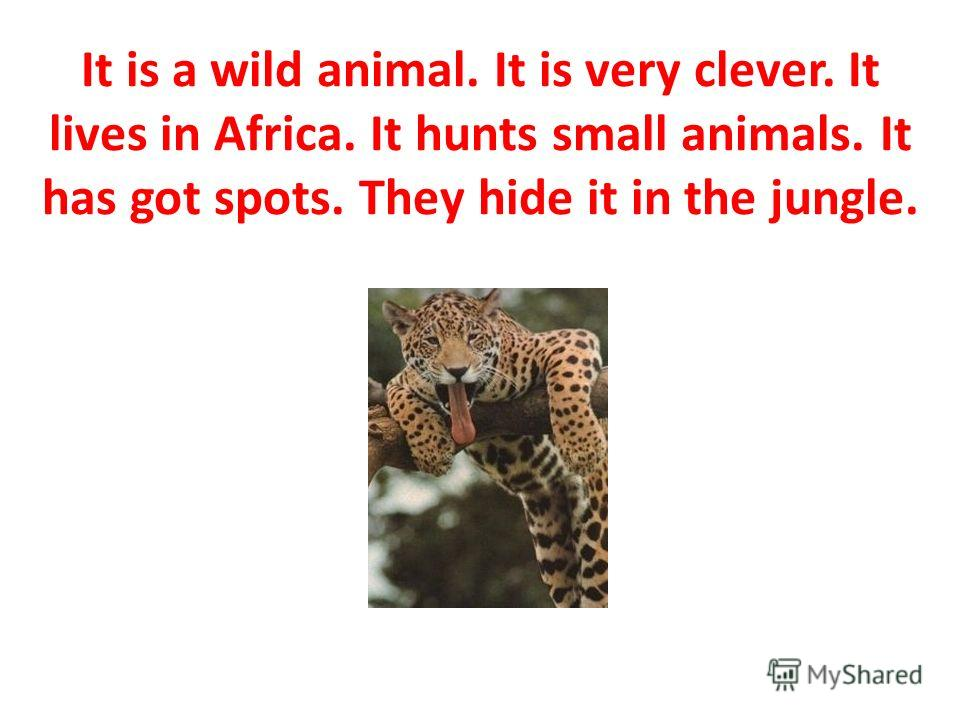 It is a wild animal. It is very clever. It lives in Africa. It hunts small animals. It has got spots. They hide it in the jungle.