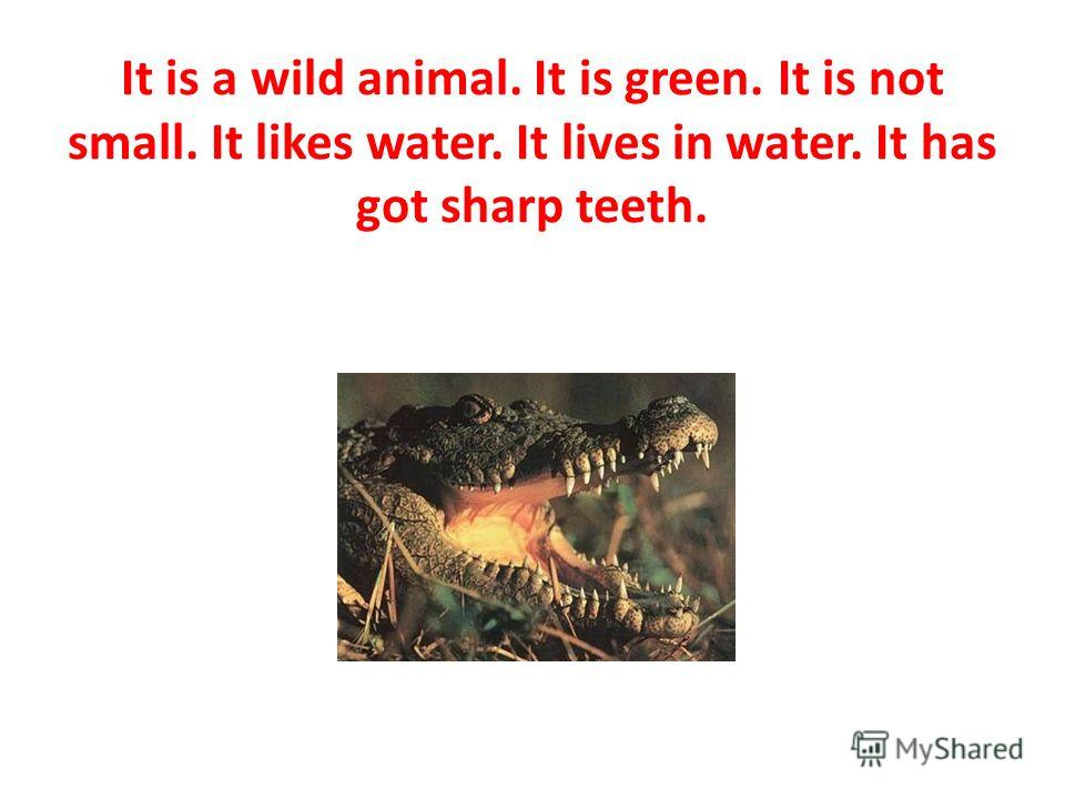 It is a wild animal. It is green. It is not small. It likes water. It lives in water. It has got sharp teeth.