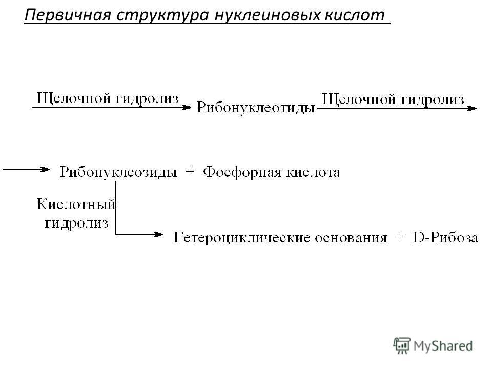 Первичная структура нуклеиновых кислот