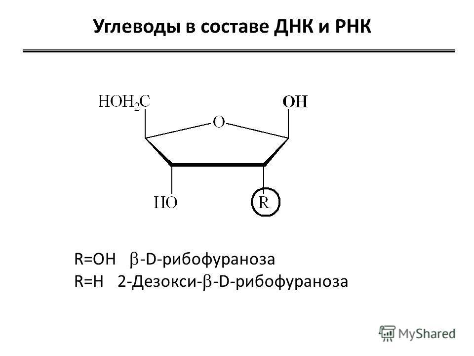 Углеводы в составе ДНК и РНК R=OH -D-рибофураноза R=H 2-Дезокси- -D-рибофураноза